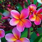 Fragrance in Colour by jesskato