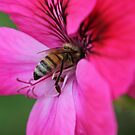 Bee January 2012 by saharabelle