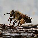 Bee June 2012 by saharabelle
