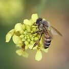 Bee October 2012 by saharabelle