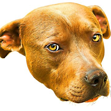American Staffordshire Terrier by TONYNSANE