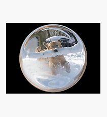 Cindy's Snow Globe's 12 Photographic Print