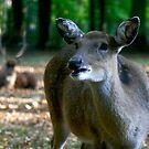 deer by wistine