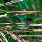 CUTE Green Tree Snake - I think... by jesskato
