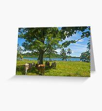 Cows. Greeting Card