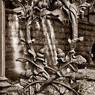 acorn fence by Lenny La Rue, IPA