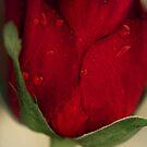 Romance On A Stem by Jemma Ryan
