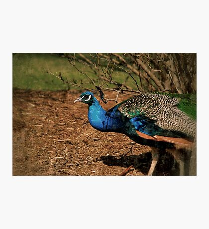 His Majesty Photographic Print