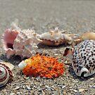 Seashells on the sand at the ocean beach by Anton Oparin