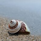 Seashell on the sand at the ocean beach 6 by Anton Oparin