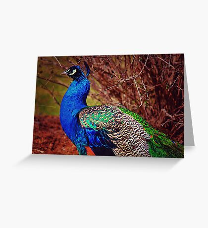 Simply Marvelous Greeting Card