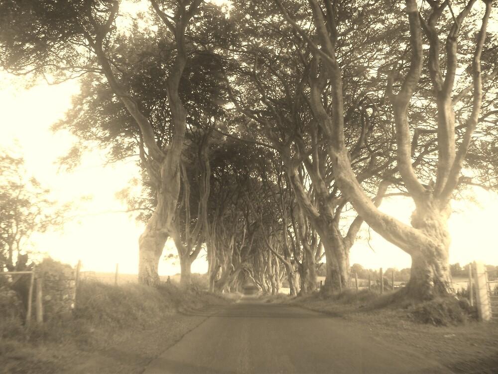 The Hedges,County Antrim,Northern Ireland by Deborah42