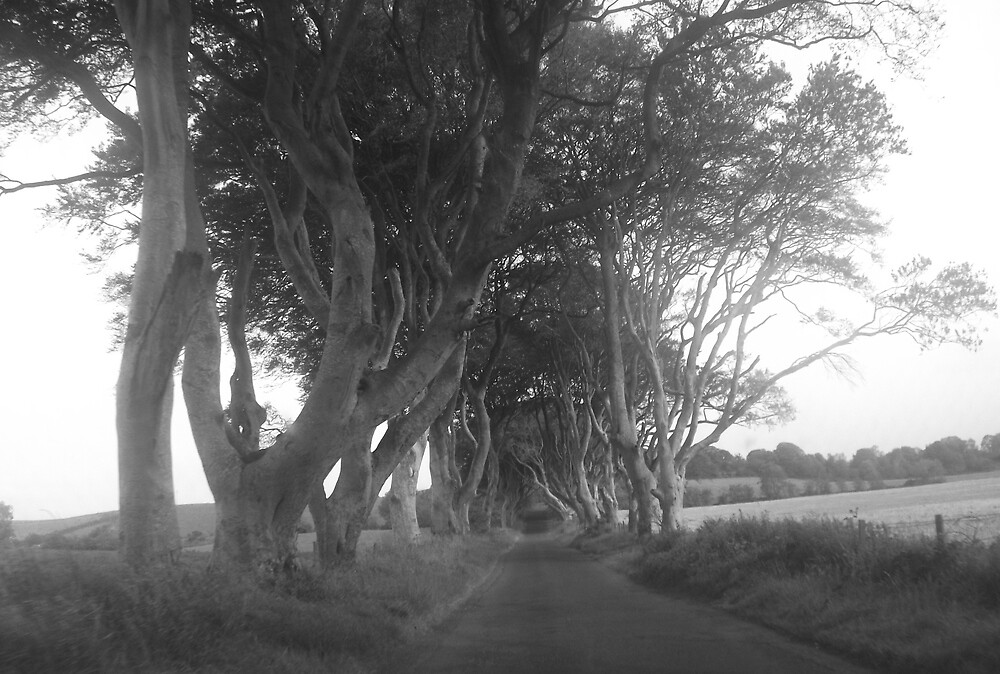 The Hedges,County Antrim,Northern Ireland by Deborah42
