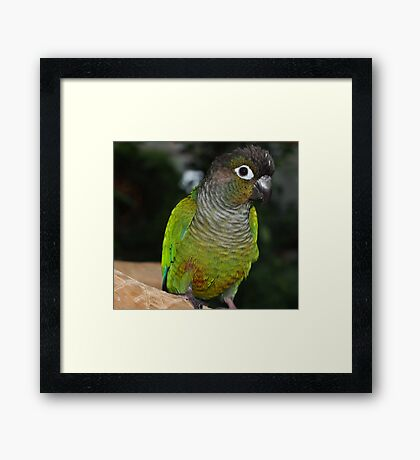 Fabulous Feathers Framed Print