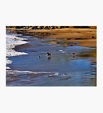 Dogs at play Photographic Print
