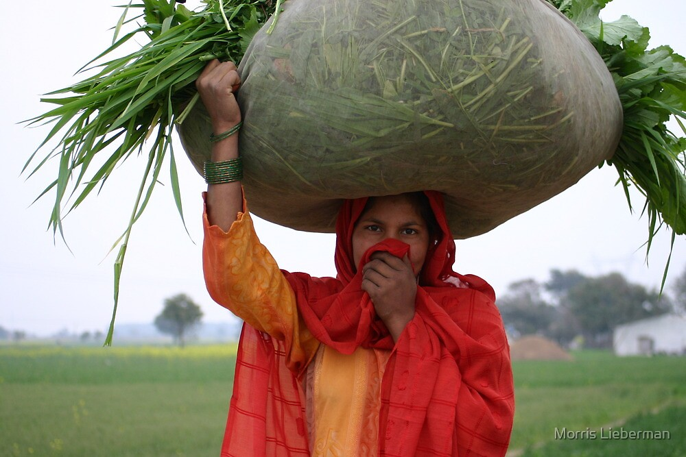 """""""Grass and a Half"""", India by Morris Lieberman"""