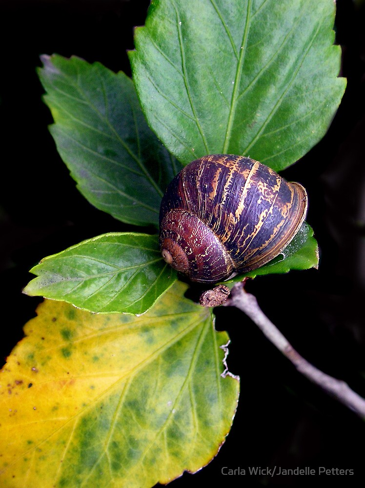 Snails I Grew Up With by Carla Wick/Jandelle Petters