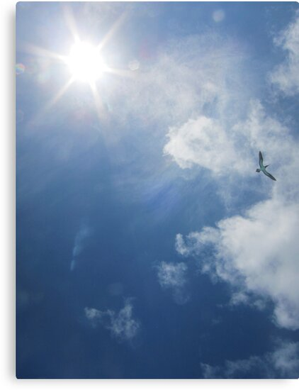 A brown booby bird flies overhead by Michelle Jonker