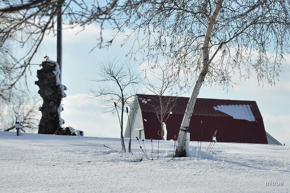 A snowy farm scene by mltrue