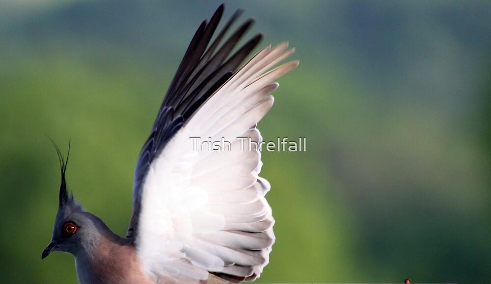 wing stretch by Trish Threlfall