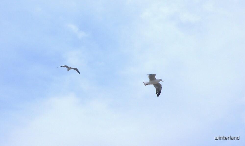 Flying by winterland