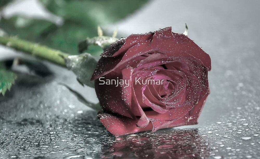 ROSE by Sanjay  Kumar