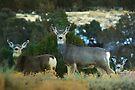Mountain Deer by Arla M. Ruggles