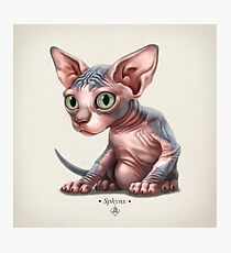 Cat-a-clysm: Sphynx kitten - Classic Photographic Print