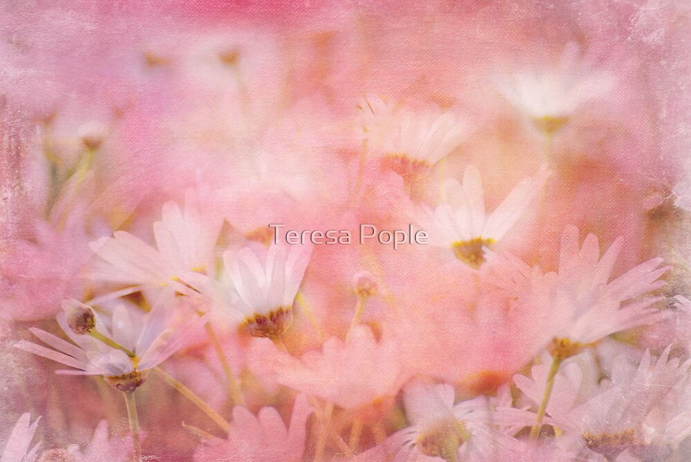 a drift of daisies by Teresa Pople
