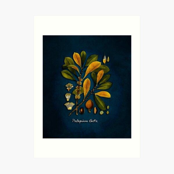 tree Palaquium gutta Art Print