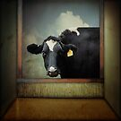 The Curious Cow by Debra Fedchin