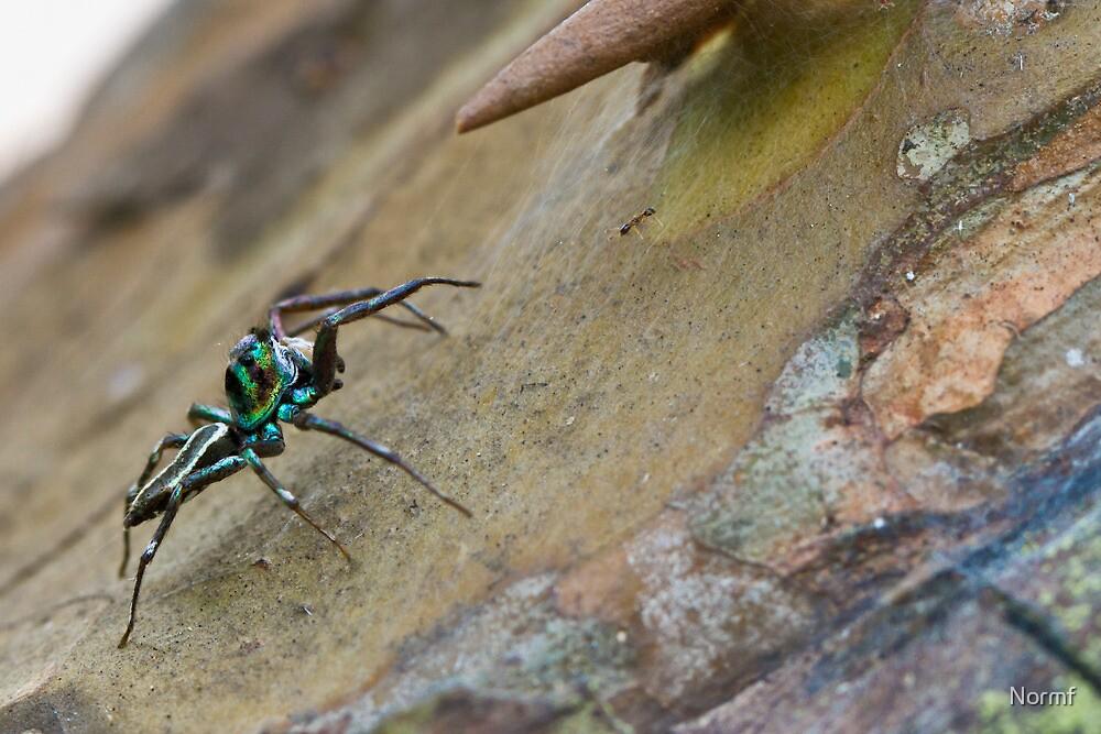Blue Bali Jumper (Spider) by Normf
