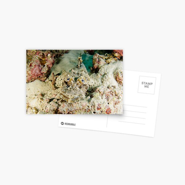 Crocodilefish - Cymbacephalus beauforti Postcard