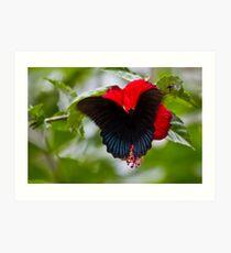 Bali Butterfly Art Print