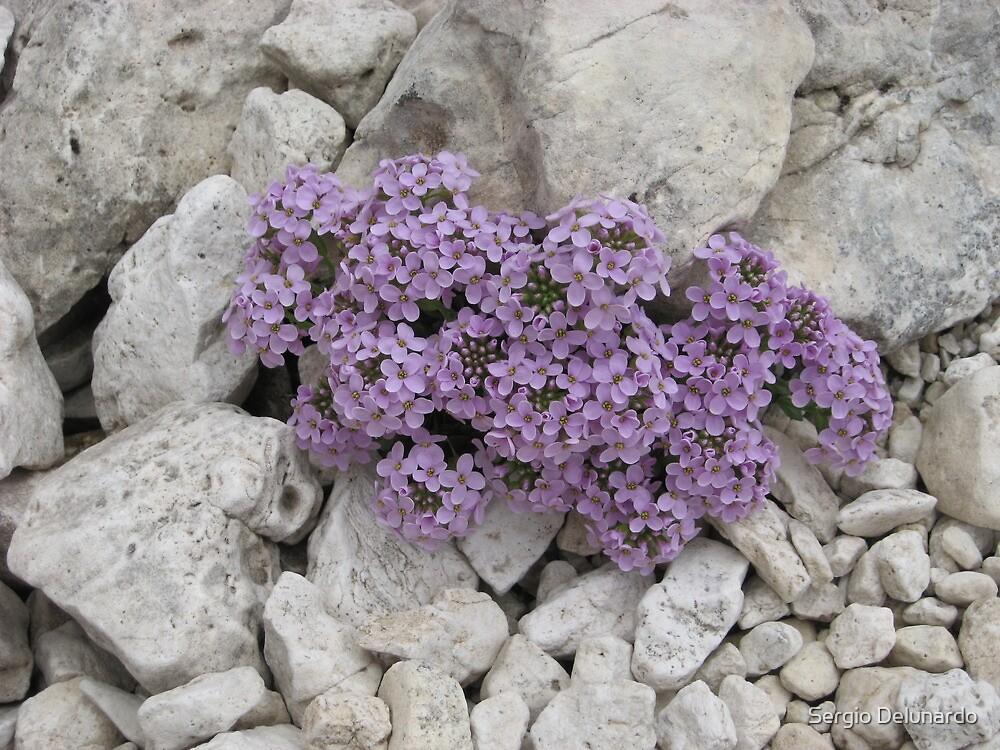 Mini flowers by Sergio Delunardo