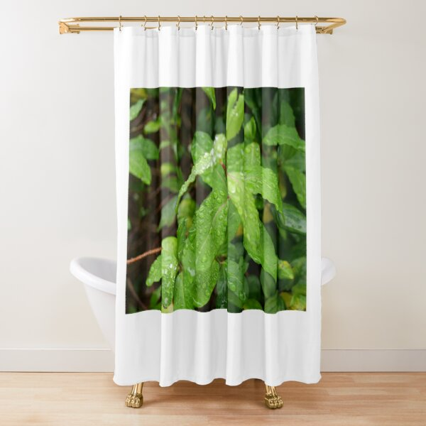 Water Drop or dew on Leaf with green background Shower Curtain