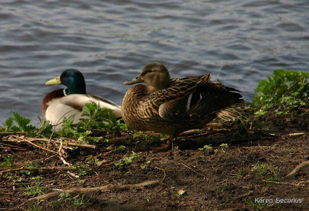 Team Duck by Karen  Securius