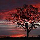 Red Skies At Dawn by JGetsinger