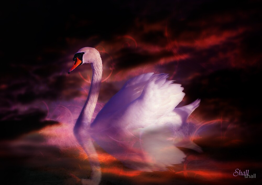 The Swan by shall