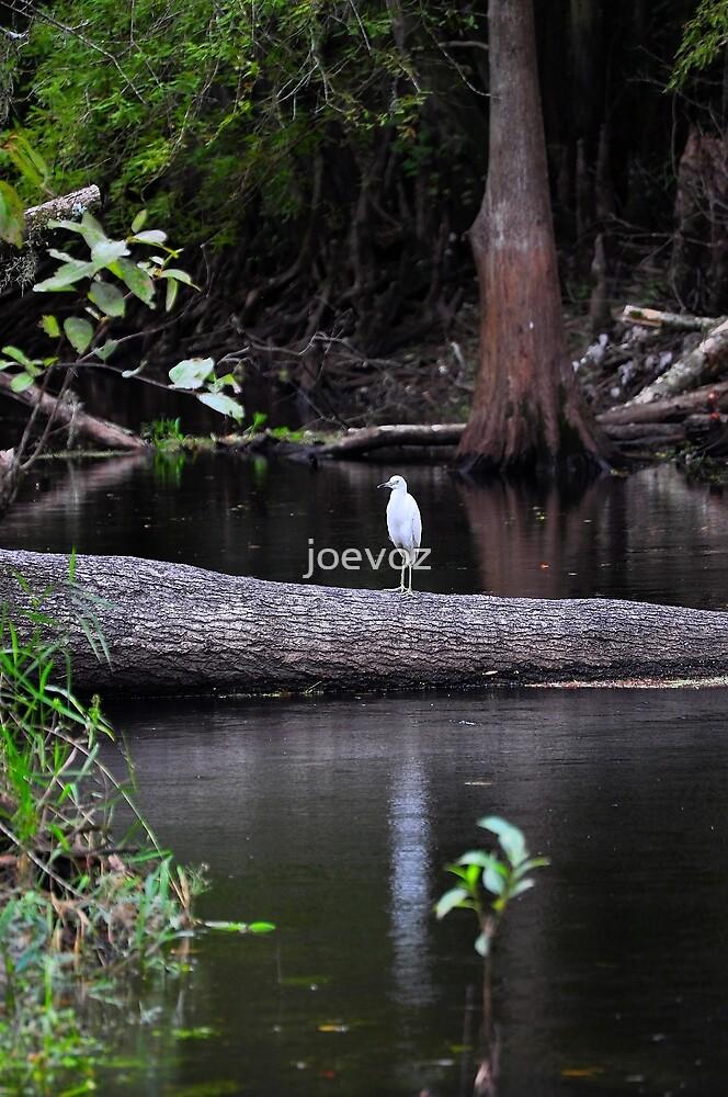 Egret on Tree by joevoz