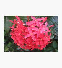 Nature's Bouquet! Photographic Print