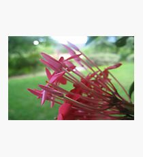 Nature's Bouquet, Deux! Photographic Print