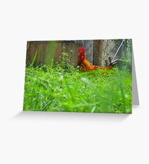 Wonderous Rooster Greeting Card