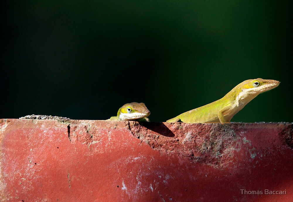 Two Cute Guys on A Brick by TJ Baccari Photography