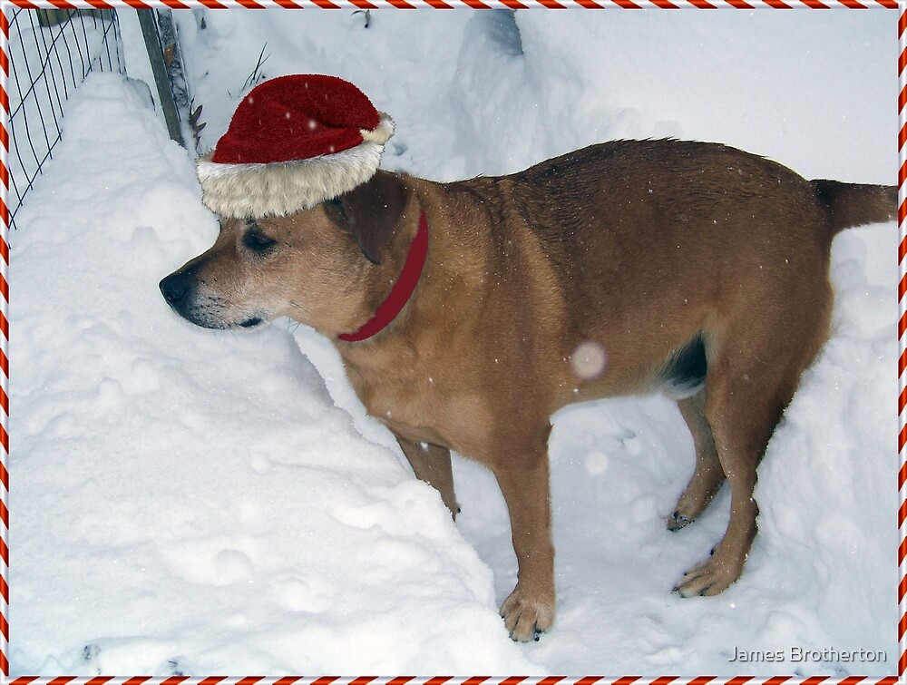 Rusty The Christmas Dog by James Brotherton