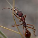 A Load of Bull.... Ant... by Puggs