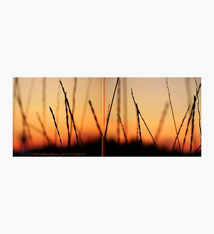 Whispers (Diptych) Photographic Print