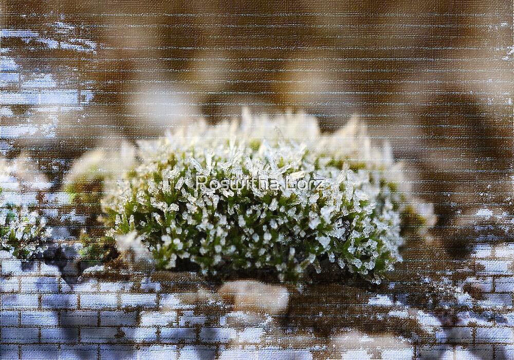 Moss by RosiLorz