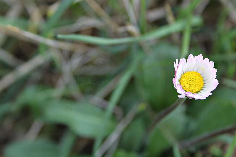primavera by elisabetta