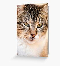 domestic feline Greeting Card